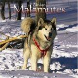 Alaskan Malamute 2006 Wall Calendar
