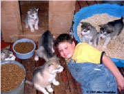 Hudsons Malamutes - Alex with Rubys pups